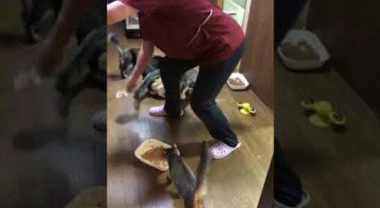 Βίντεο: Πεινασμένες γάτες σε παροξυσμό - Έκαναν σαν τρελές για το φαγητό τους